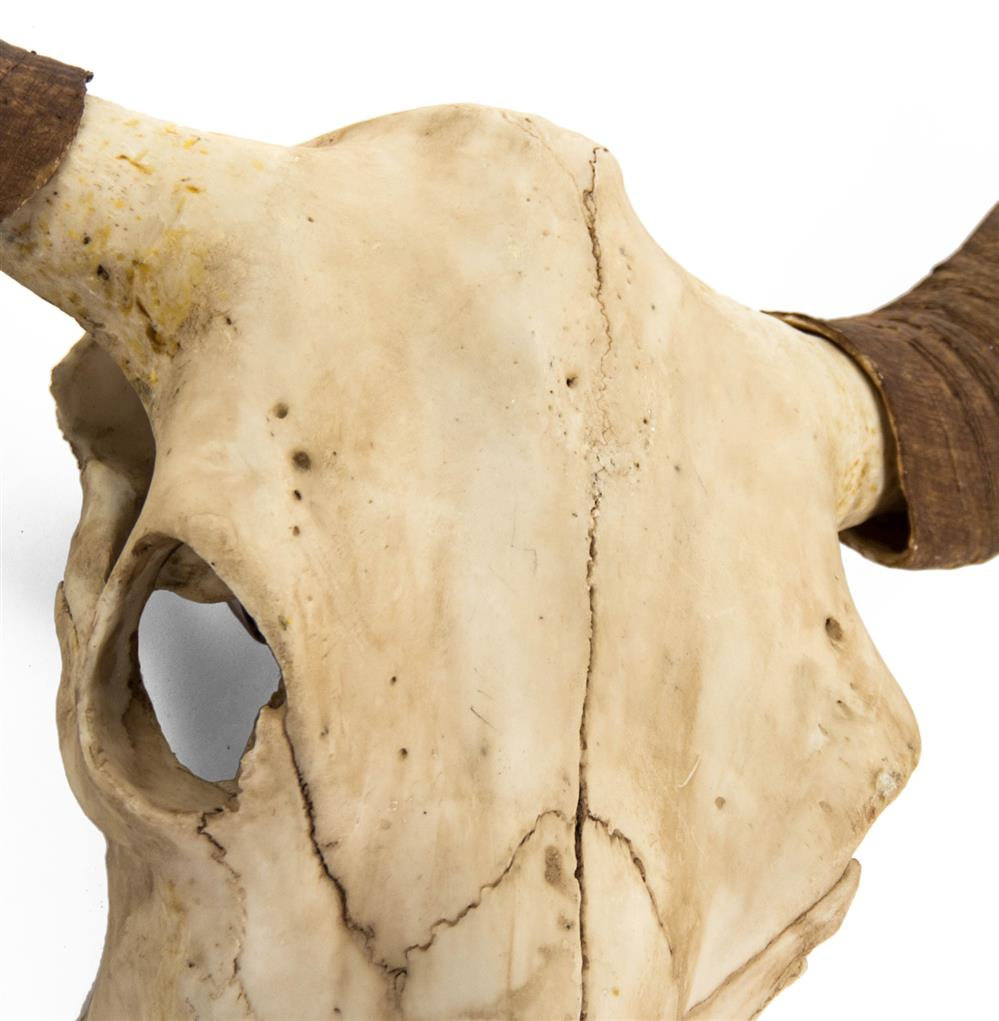Toro Rustic Lodge Bull Head Skull Reproduction Wall Mount Sculpture