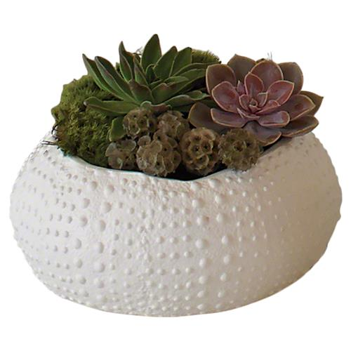 Coastal Beach White Ceramic Sea Urchin Decorative Bowl - 11.75D | Kathy Kuo Home
