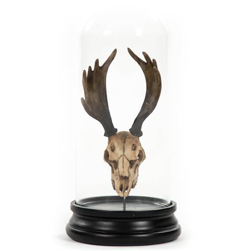 Yuma Rustic Lodge Reproduction Moose Antler Trophy in Glass Cloche | Kathy Kuo Home