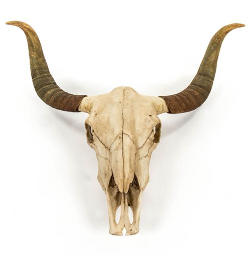 Toro Rustic Lodge Bull Head Skull Reproduction Wall Mount Sculpture | Kathy Kuo Home