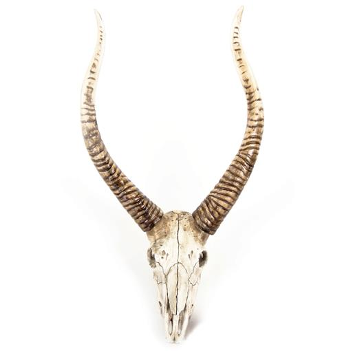 Yuma Rustic Lodge Reproduction Goat Skull Trophy Wall Mount Sculpture | Kathy Kuo Home