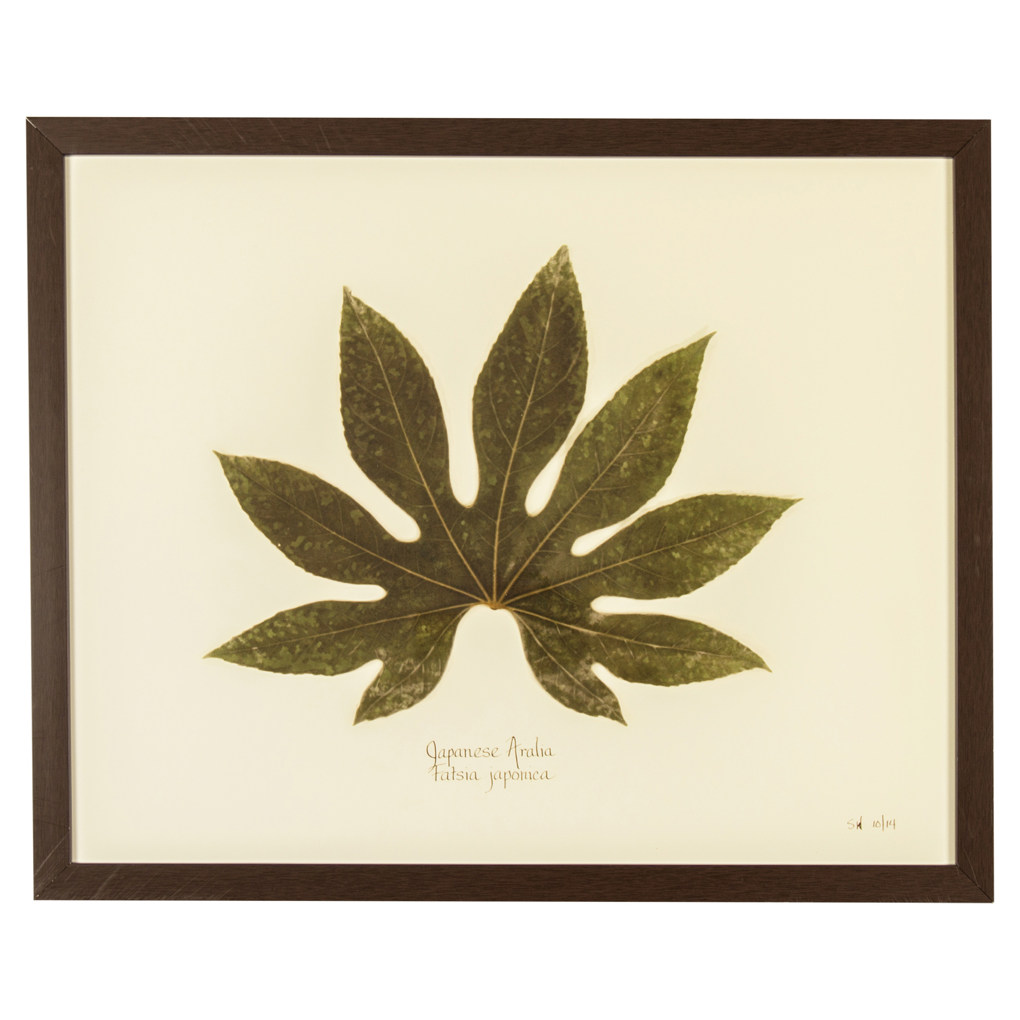 Industrial Japanese Aralia Print Botanical Framed Wall Art