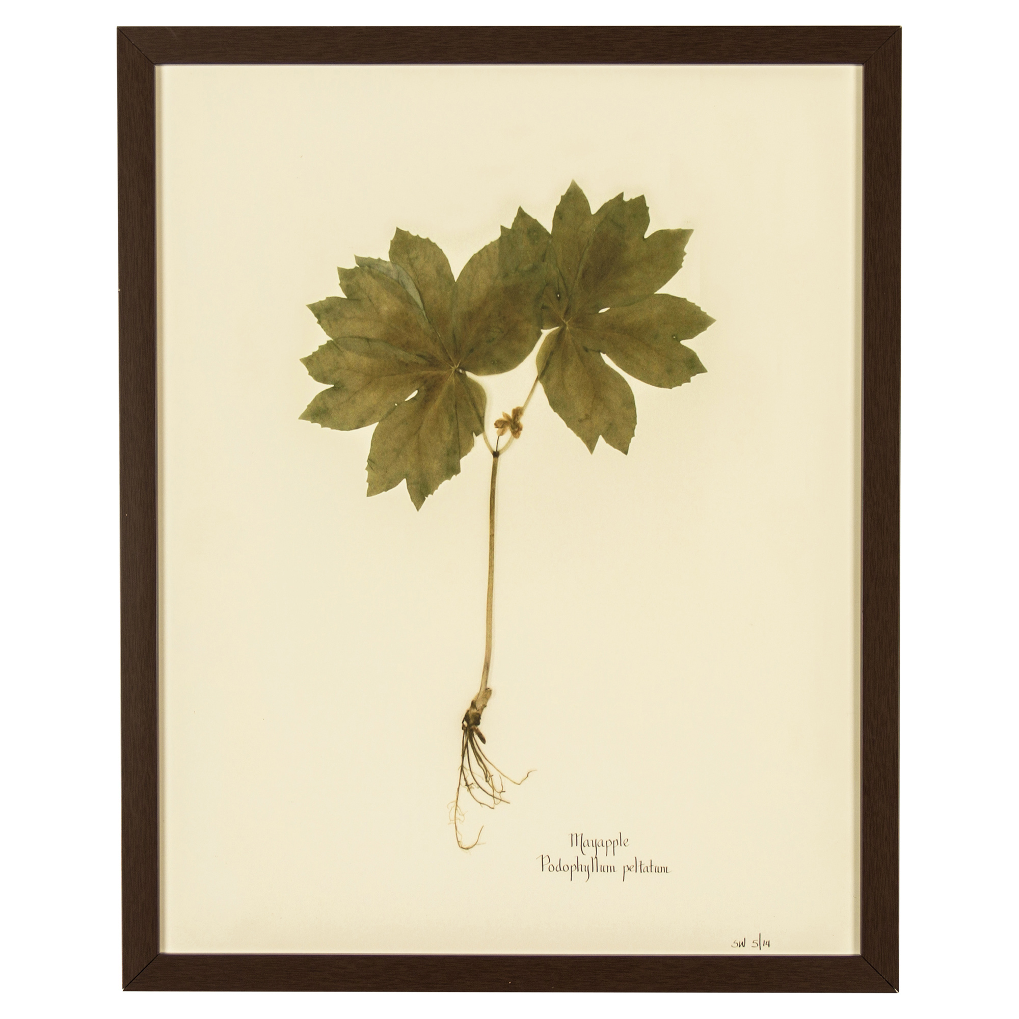 Industrial Mayapple Print Botanical Floral Framed Wall Art
