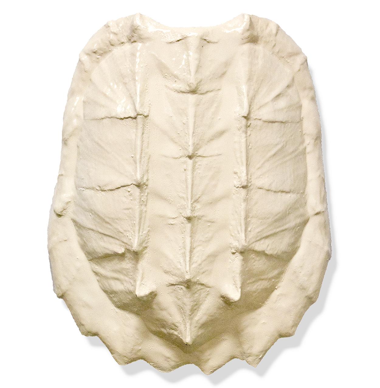 Duxbury Coastal Solid Ivory Gator Turtle Shell - by Karen Robertson