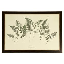 Fronde French Country Antique Bronze Framed Fern Print