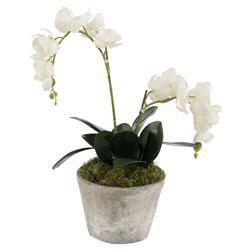 John-Richard White Orchid Moss Rustic Garden Arrangement