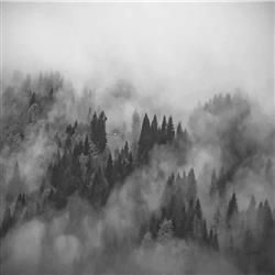 Anewall Foggy Hills Modern Classic Forest Mountain Illustration Wallpaper