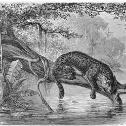 Anewall Jaguar Modern Classic Illustrated River Jungle Wallpaper