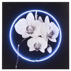 Kelly Hoppen Kelly Modern Classic White Neon Orchid Wood Panel Print