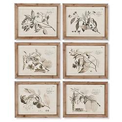 Farah French Country Light Wood Framed Fruit Branch Illustrations - Set of 6
