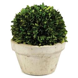 Marin French Country Green Boxwood in Pot