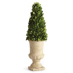 Marin French Country Preserved Potted Cone Boxwood Topiary