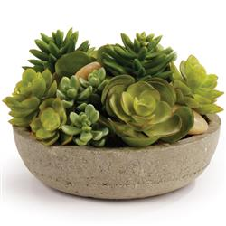 Lily French Country Green Mixed Potted Succulents - Small