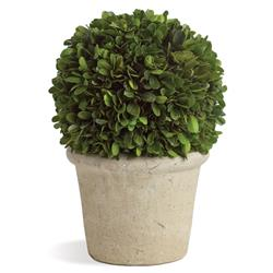 Marin French Country Preserved Potted Boxwood Sphere