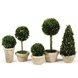 Marin French Country Green Boxwood Potted Topiaries - Set of 5