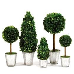 Marin French Country Green Boxwood Clear Mercury Glass Topiaries - Set of 5
