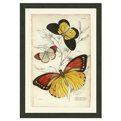 Smith & Co French Country Large Butterflies - 7