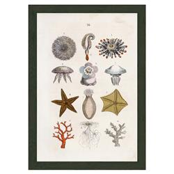 Smith & Co Sealife With Coral C 1864