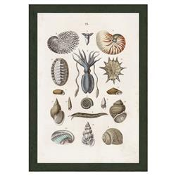 Smith & Co Sealife With Sqauid C 1864