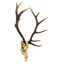 Yuma Rustic Lodge Reproduction Deer Skull Trophy Wall Mount Sculpture | Kathy Kuo Home