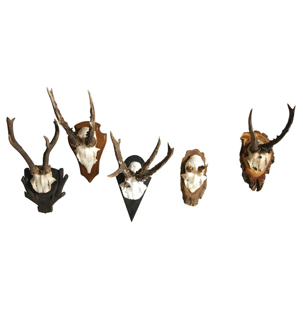 Black Forest Roe Buck Vintage Antler Wall Mount Trophy Kathy Kuo Home