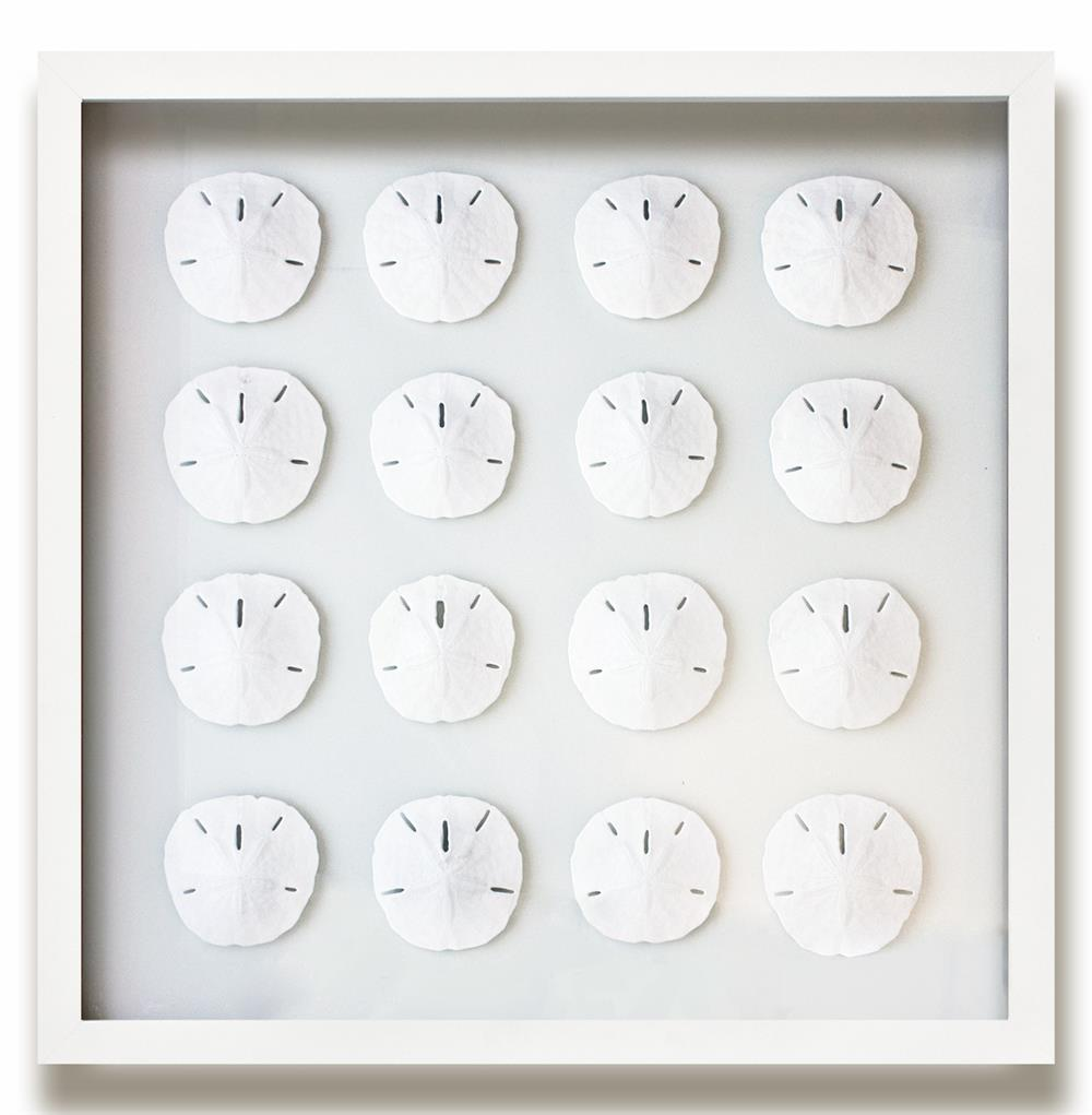 Sand Dollar Wall Decor