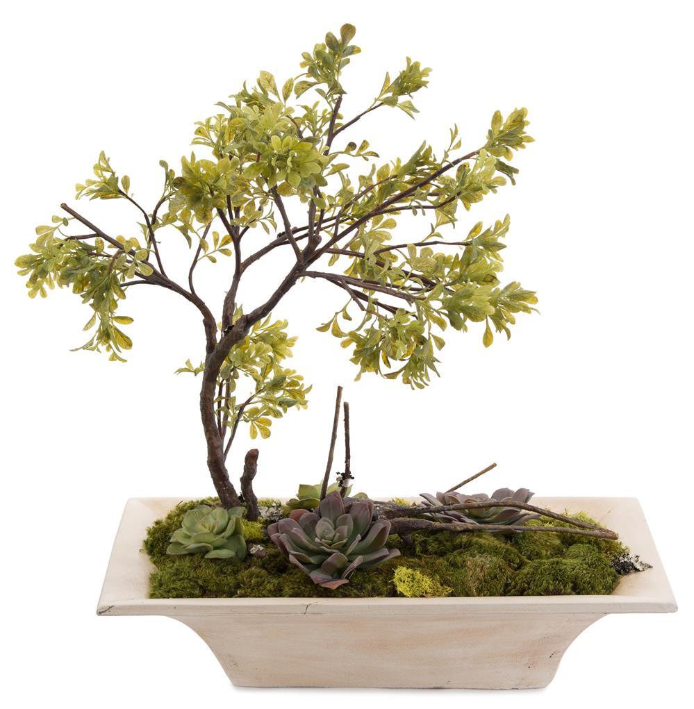 how to grow moss on bonsai