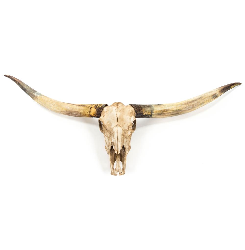 Texas Longhorn Steer Skull Rustic Lodge Reproduction Wall