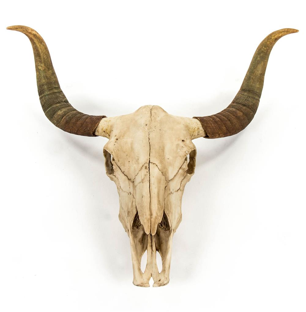 Bull Head Wall Decor Toro Rustic Lodge Bull Head Skull Reproduction Wall Mou On Fantastic Large Faux Bull Head The Perfect I