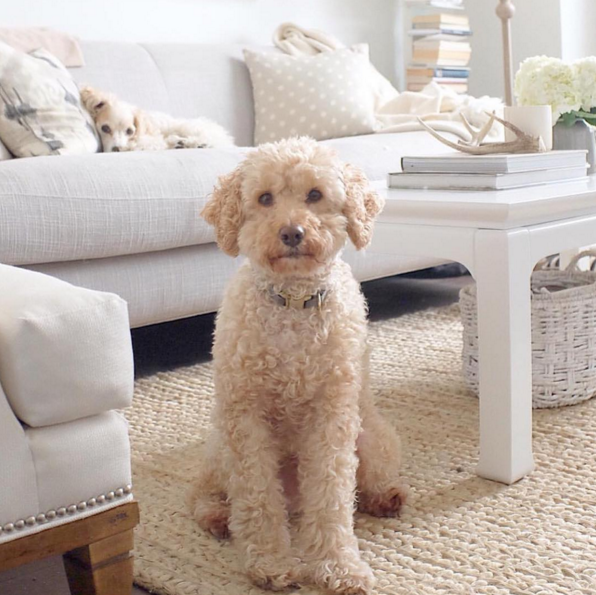 kathy kuo home pet friendly furniture
