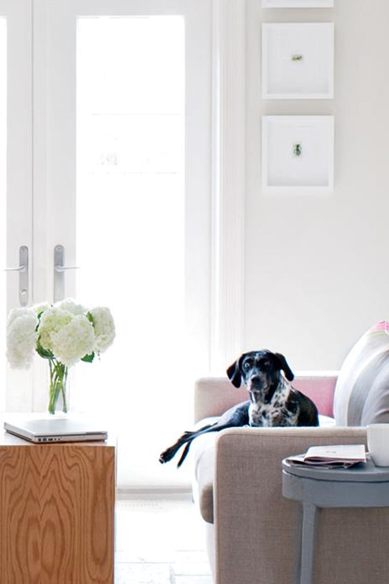 Pet Friendly Furniture Kathy Kuo Home