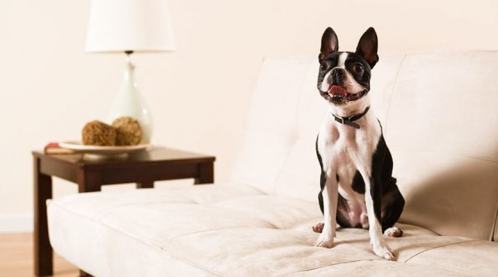 Pet-Friendly Furniture and Other Design Tips for Animal Lovers
