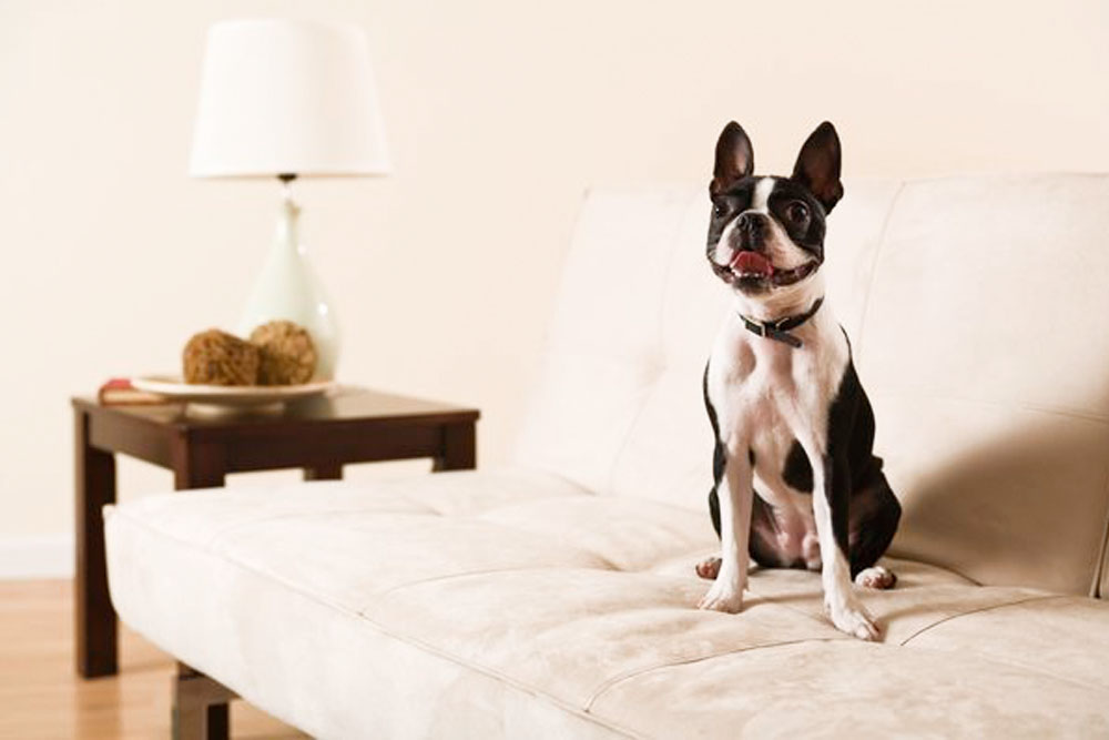 Pet Friendly Furniture And Other Design Tips For Animal Lovers