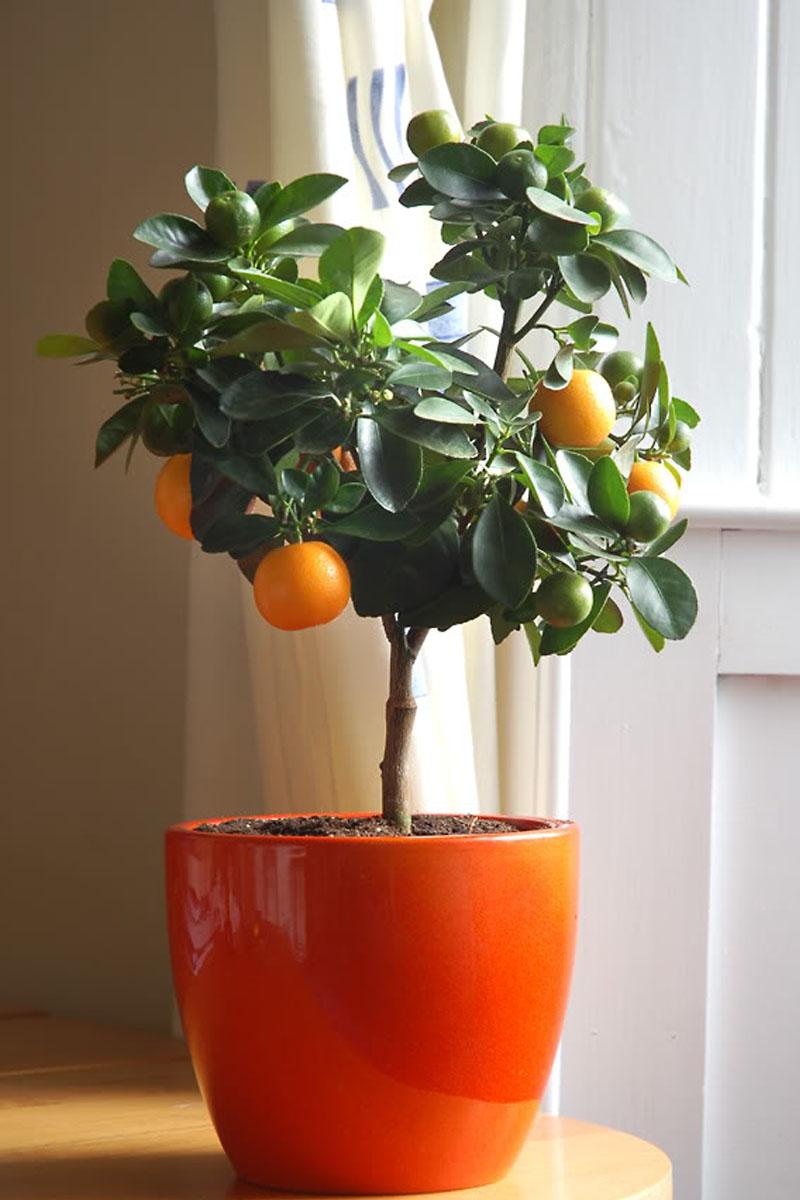 orange tree kathy kuo home