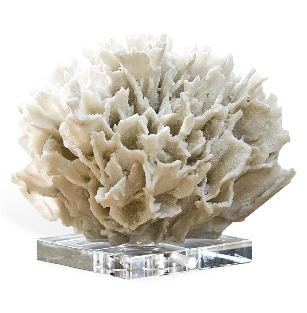 decorative piece of coral