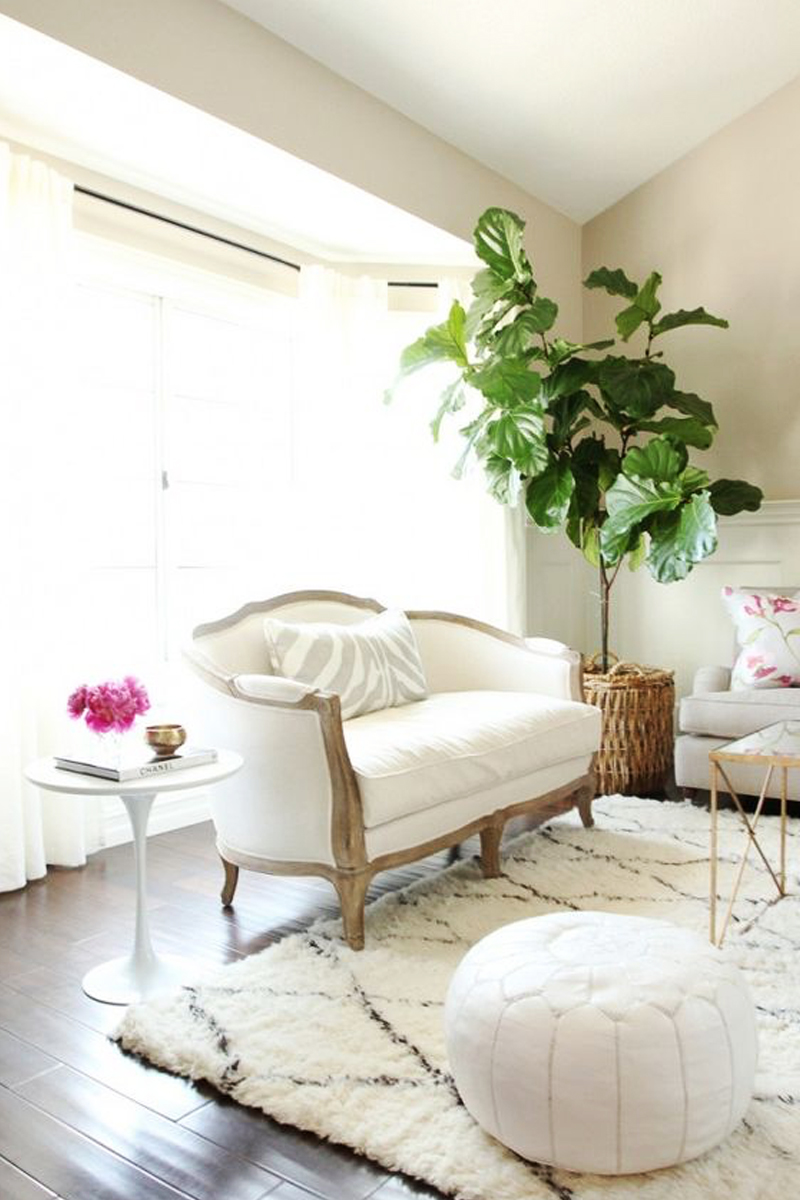 living room design with fiddle-leaf fig