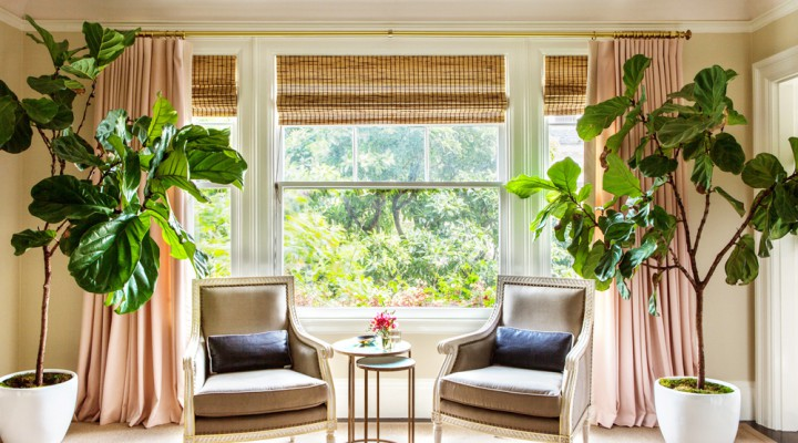 Interior Design Trends: The Rise & Fall of the Fiddle-Leaf Fig