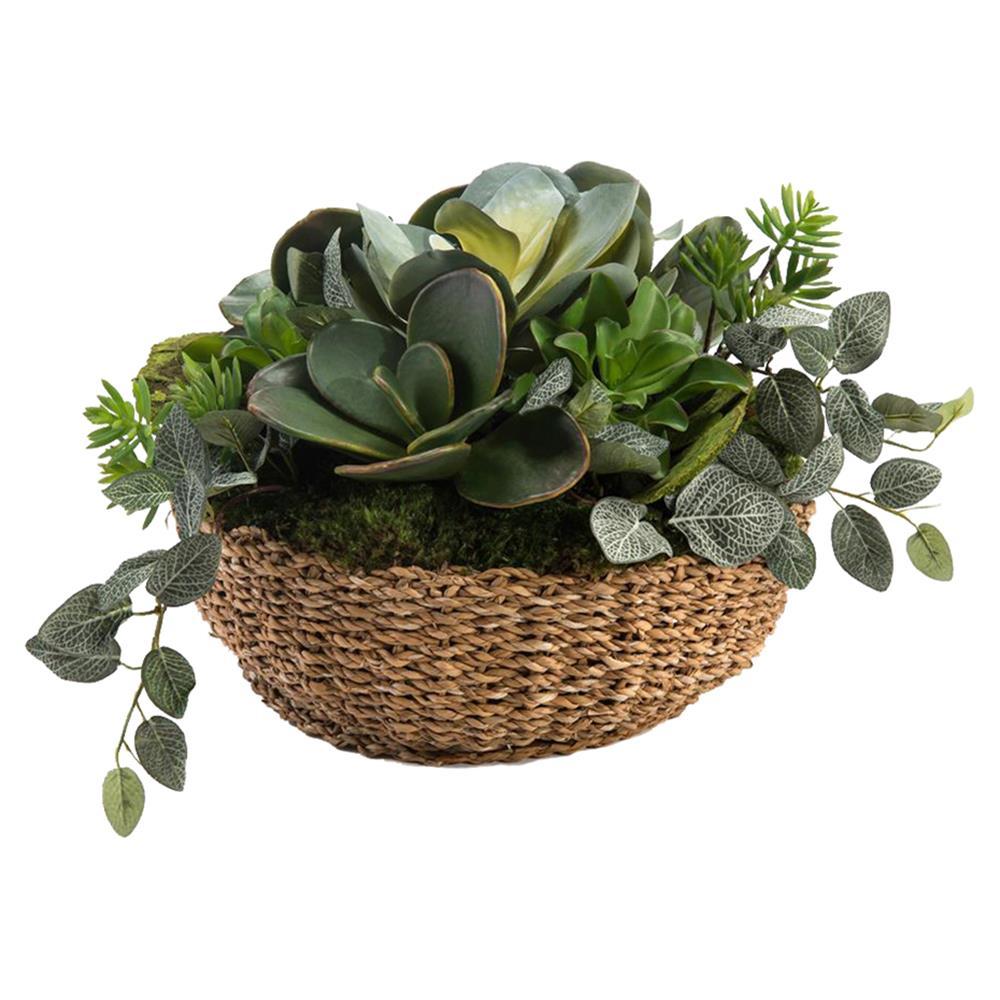 succulent plants in a wicker basket