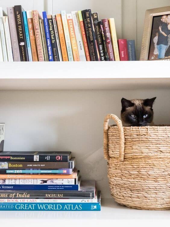 siamese cat in a basket
