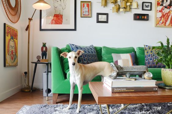 dog and green couch