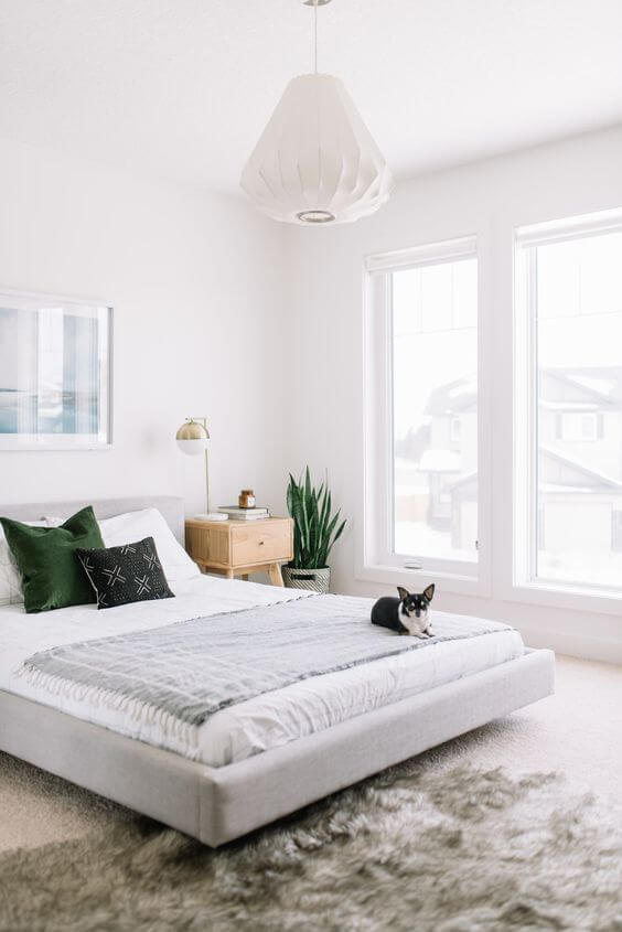 cute dog on a bed