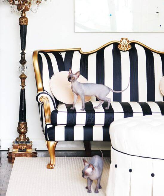 cats on striped couch
