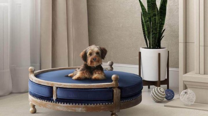 New Pet? No Problem: Secrets to Pet-Friendly Interior Design