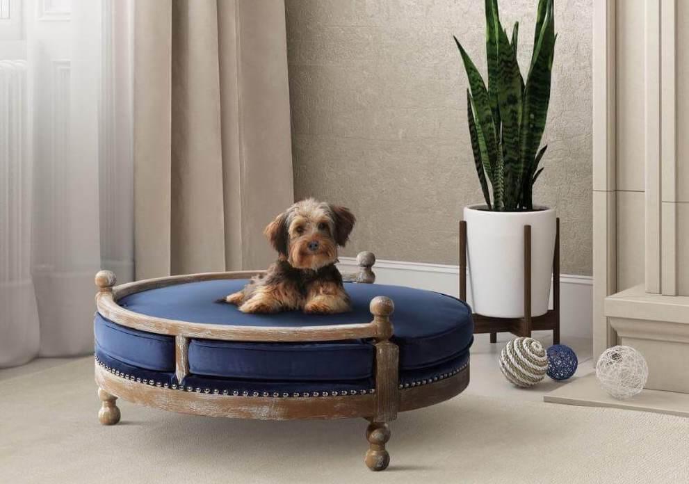New Pet? No Problem: Secrets to Pet-Friendly Interior Design